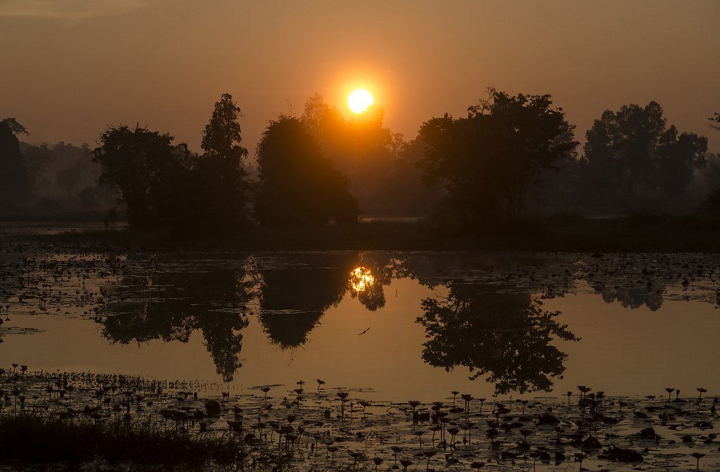 Sunrise over rice country
