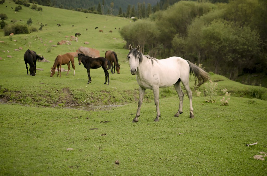 Horses grazing in Karakol valley