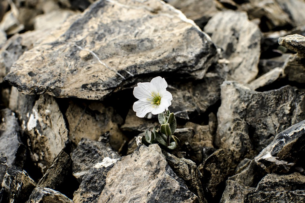 Little flowers grow at 4100 m on Chinese border