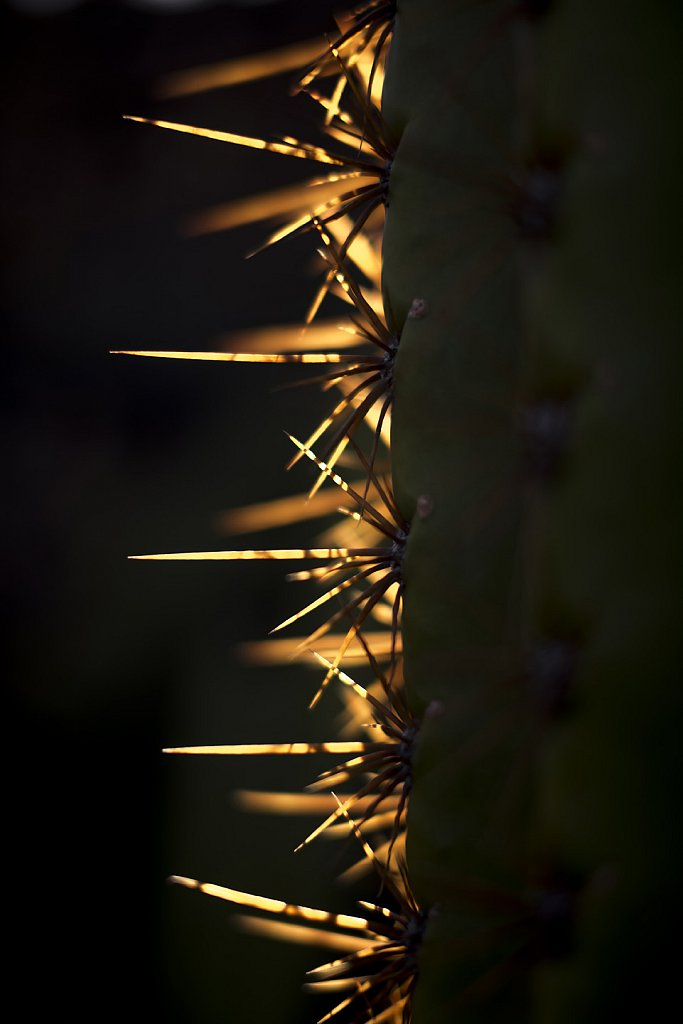 Cacuts thorns