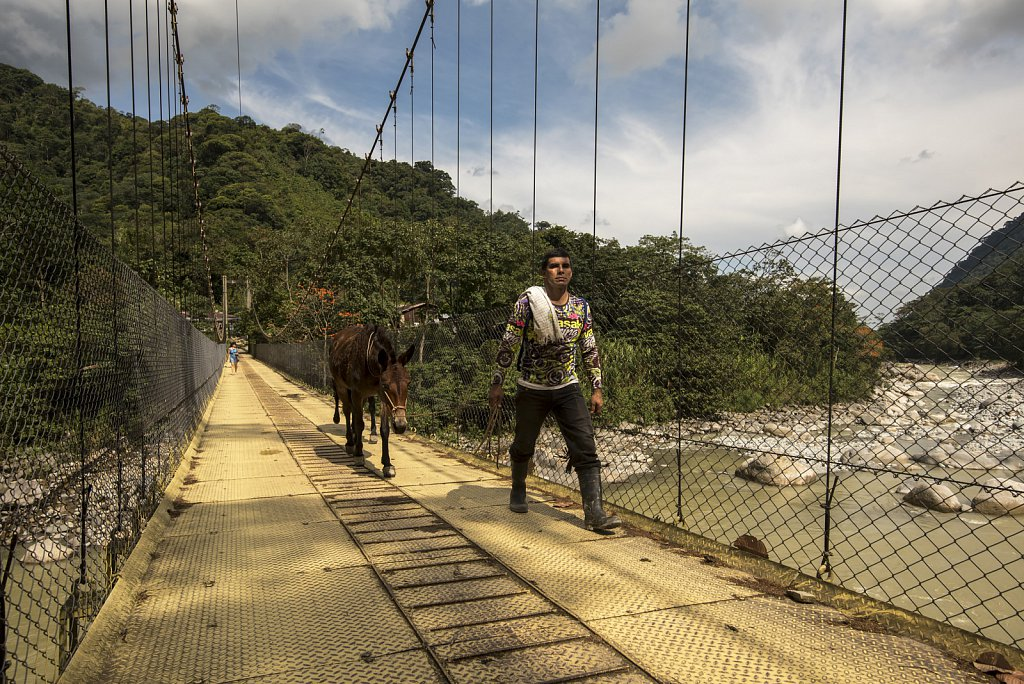 Lejanías - Collecting coffee beans on horseback