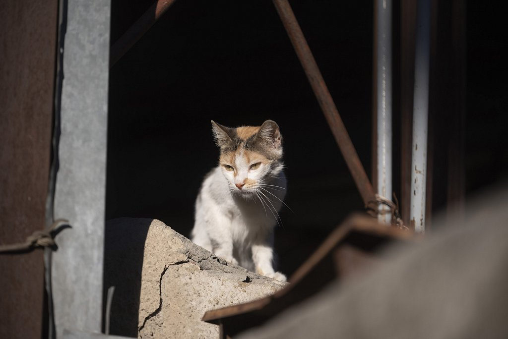 Tbilisi cat in old town
